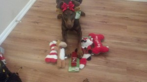 Penny, petco, sales, dog, toys