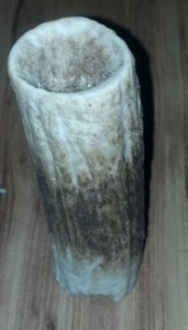 2 Weeks of wear on elk antler